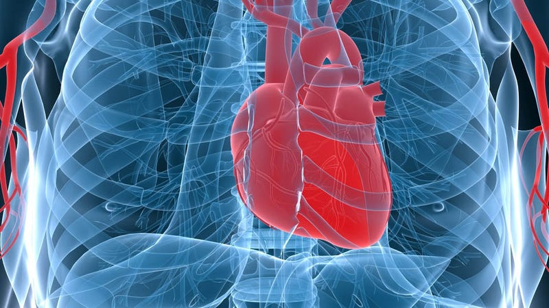 Illustration for article titled Scientists Have Found a Way to Regenerate Muscle Tissue After a Heart Attack