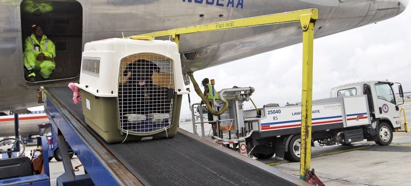 Illustration for article titled Delta's Enhanced Package Tracker Helps Keep Your Pet Alive, For A Fee