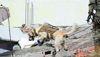 Illustration for article titled Dog news Frida is retiring