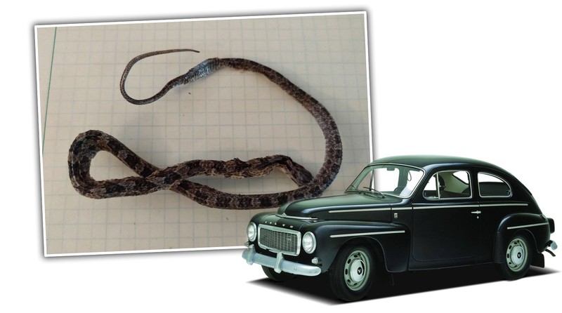Illustration for article titled Vintage Volvo Gas Tank Comes With Exciting Bonus Dead Snake