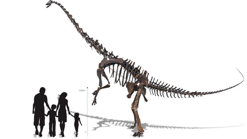 Which Eccentric Millionaire Will Buy This Nearly Complete Diplodocus Skeleton That's Going Up for Auction?