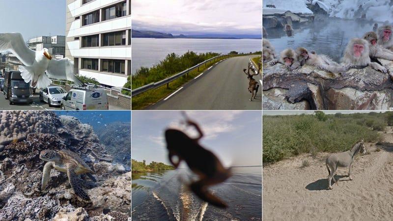 Illustration for article titled Curiosas fotos de animales cazados por las cámaras de Street View