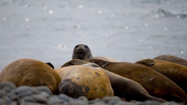 We Should Give Seals PhDs