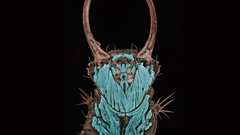 Illustration for article titled Seeing the Scary Wondrous World in These Micro Photos Will Give You Beautiful Nightmares
