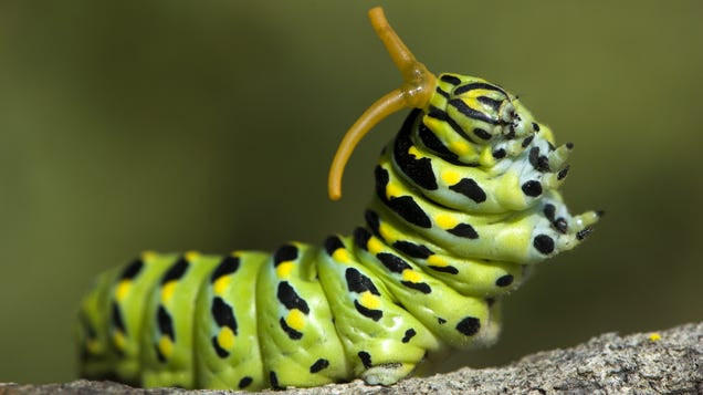 I Got My Child Caterpillars: Greetings From My New Poop-Filled Life