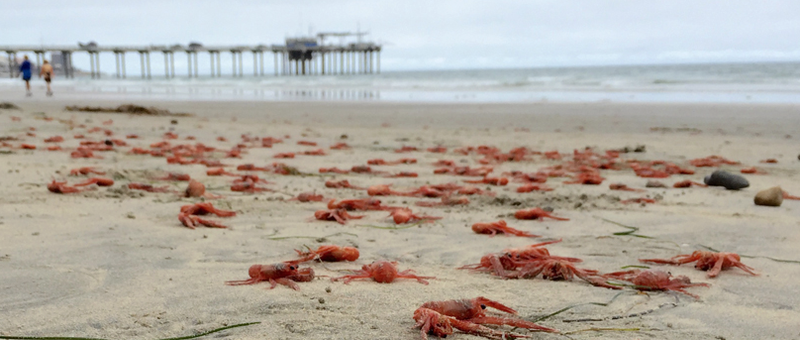 Photo by Scripps Institution of Oceanography