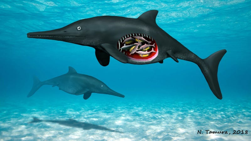Artist's depiction of the pregnant Ichthyosaur, with cutaway revealing embryos.