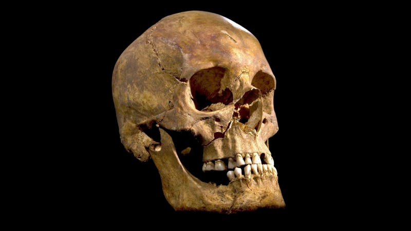 Illustration for article titled Confirmed: Richard III's Skeleton Found Underneath a Parking Lot