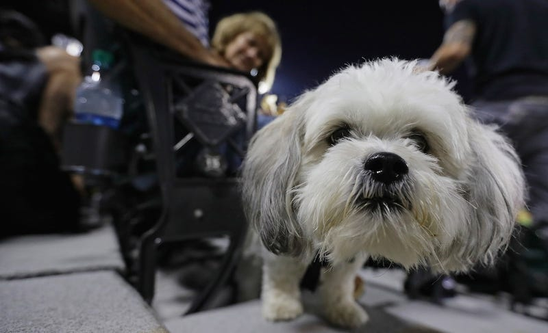 Photo: Jonathan Daniel/Getty Images