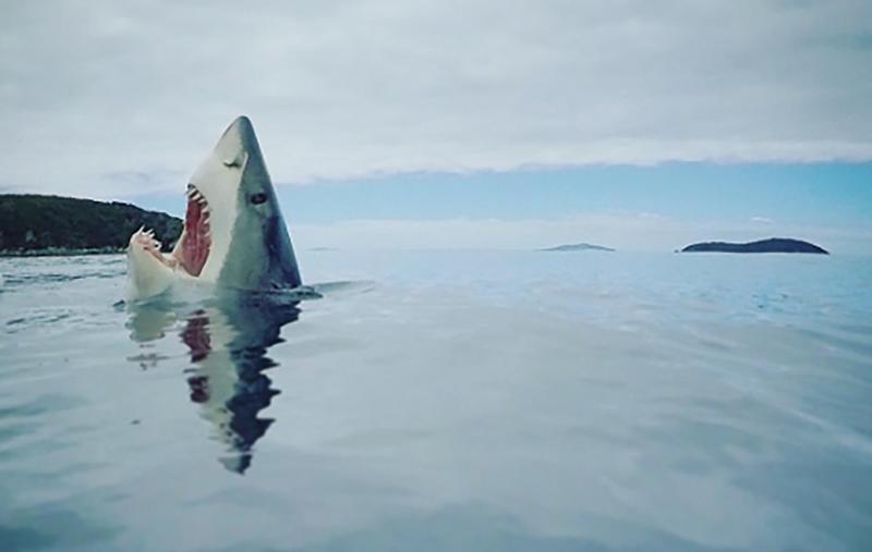 Illustration for article titled La verdadera historia detrás de la foto viral del tiburón pisando una pieza de lego