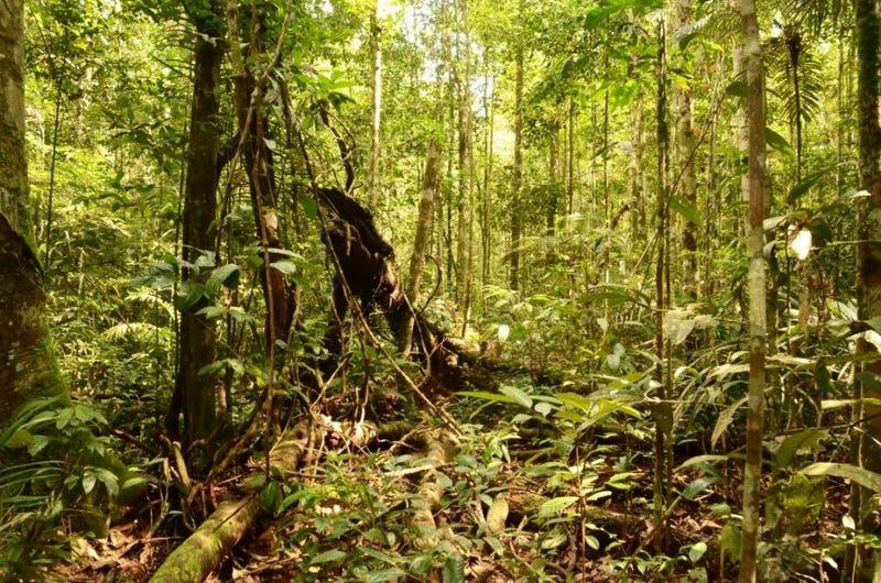 Illustration for article titled Esta región del Amazonas albergó una compleja civilización perdida de la que no se sabía nada hasta ahora