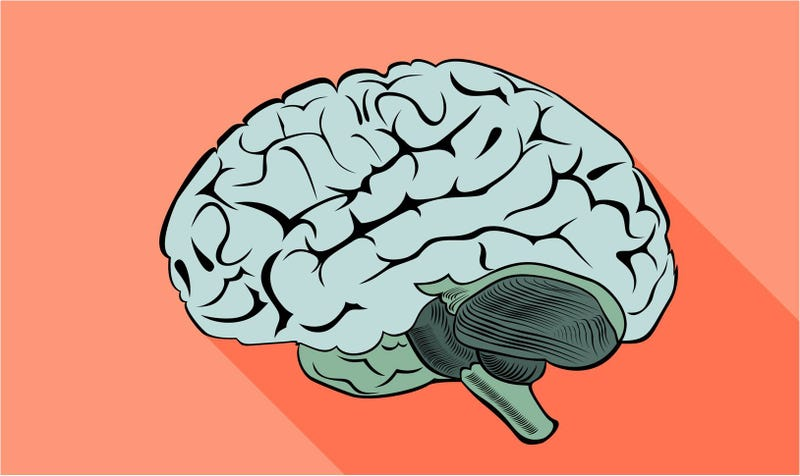 Illustration for article titled Por qué hacer ejercicio físico es bueno para tu cerebro