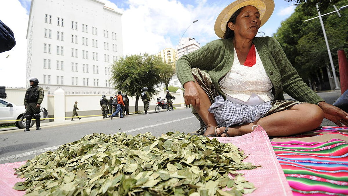 Coca leaves are proving addictive to Bolivian chefs