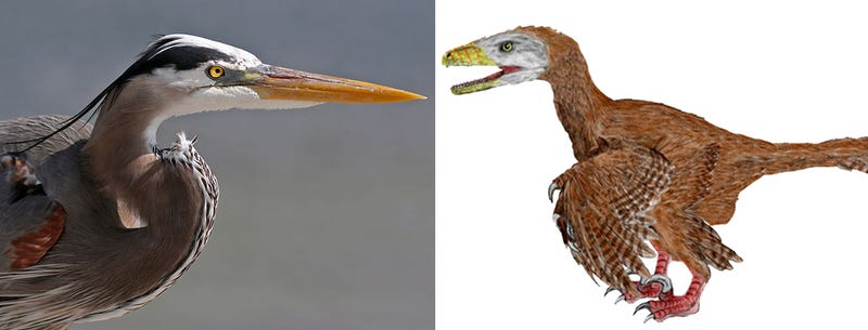 Illustration for article titled Predatory Birds Remind Us That Inside, They're 100% Dinosaur