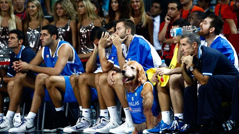 Illustration for article titled Washed-Up Air Bud Signs With Greek Pro Team