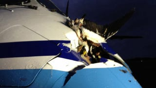 Illustration for article titled Here's What Happens When An Albatross Strikes A Japanese Coast Guard Plane