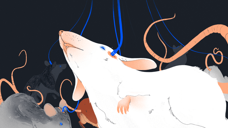 Illustration for article titled Elon Musk's Neuralink Sought to Open an Animal Testing Facility in San Francisco