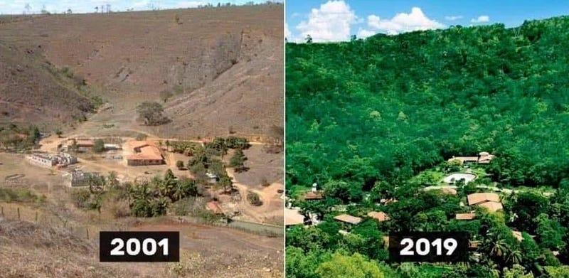 Illustration for article titled Una pareja planta dos millones de árboles en una selva tropical destruida. Este es el resultado 20 años después