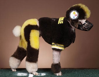 Illustration for article titled All Steeler Fans Are Basically Puppy Murderers