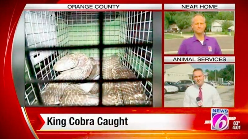 Illustration for article titled Escaped Cobra Named Elvis Caught Behind Florida Woman's Dryer