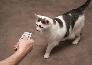 Illustration for article titled Control-A-Cat Remote Only Makes Cats More Frustrating