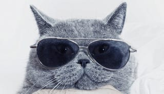 Illustration for article titled 10 Feline Celebrities That Prove We Were Always Obsessed With Cats