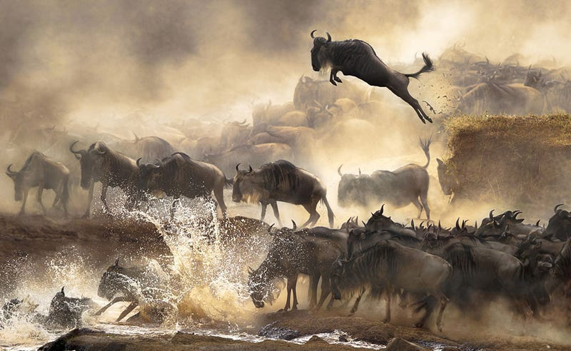 Illustration for article titled The finalists of the Sony World Photography Awards are just stunning