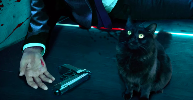 This YouTuber is doing an a-meow-zing job of editing their cat into famous movies