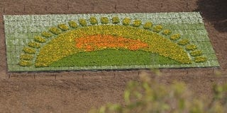 Illustration for article titled Toyota Outhippies Itself With Freeway Flower Installation