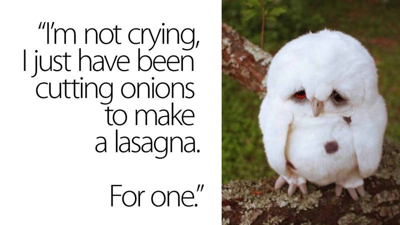 Baby Chicken Quotes: Is This The Saddest Owl In The History Of Saddest Owls