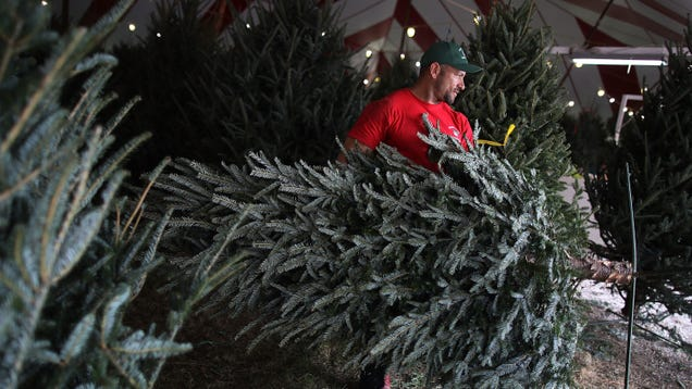Save Money on Your Christmas Tree by Asking for a Dud