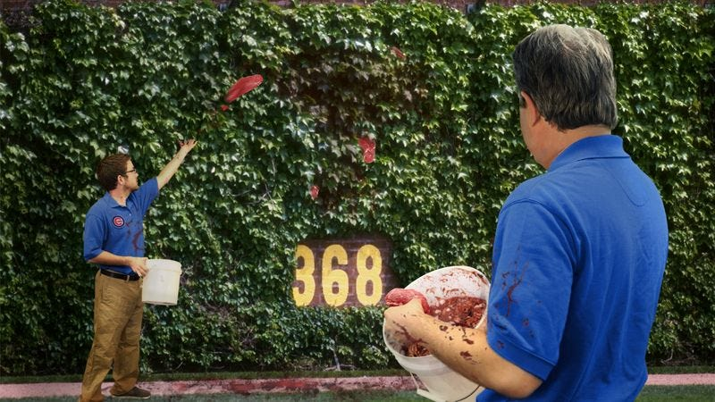 Illustration for article titled Wrigley Field Grounds Crew Feed Buckets Of Raw Meat To Hungry Ivy