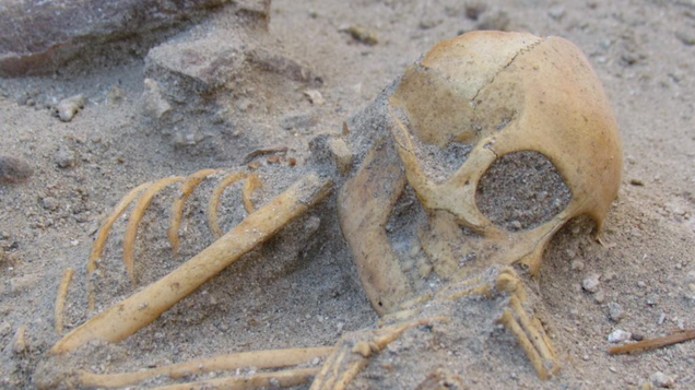 Pet Monkeys Brought to Ancient Egypt Were Buried With Sea Shells and Other Trinkets