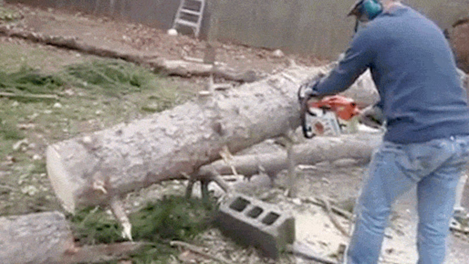 Magic Tree Stands Back Upright After Being Chopped Down To