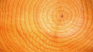 Illustration for article titled The guy who discovered the truth about tree rings