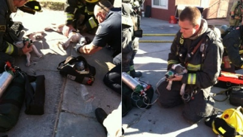 Illustration for article titled Firefighters Giving Puppies CPR Will Make Your Heart Explode
