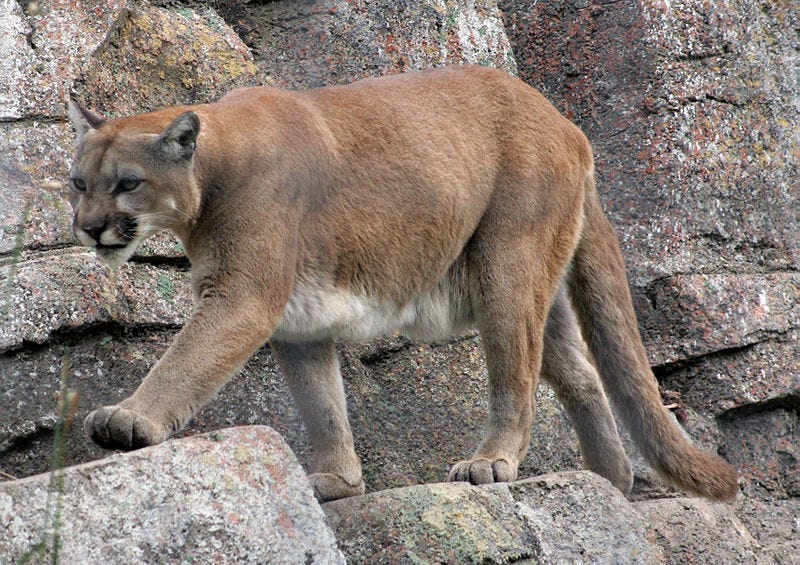 Illustration for article titled Rock Star's Kid Tweets Surprising Photo of Beverly Hills Cougar