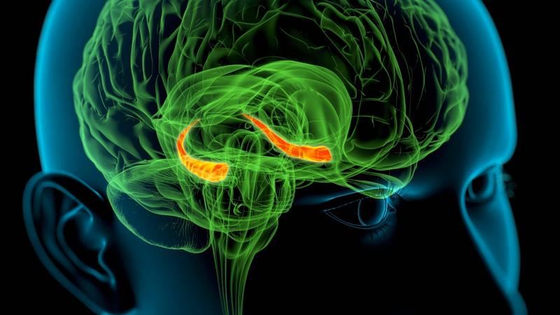 Un cronómetro en el cerebro: nuevas pistas sobre cómo medimos el tiempo