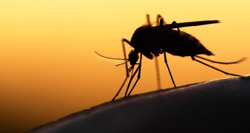 Illustration for article titled Confirman el primer caso de una mujer embarazada contagiada con el virus Zika en España