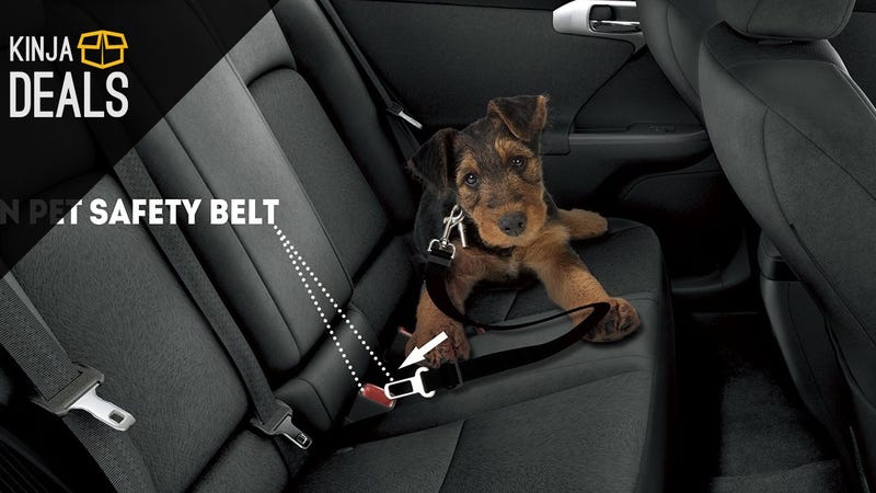 Illustration for article titled Buckle Up (Your Pets) Before Driving Home For The Holidays