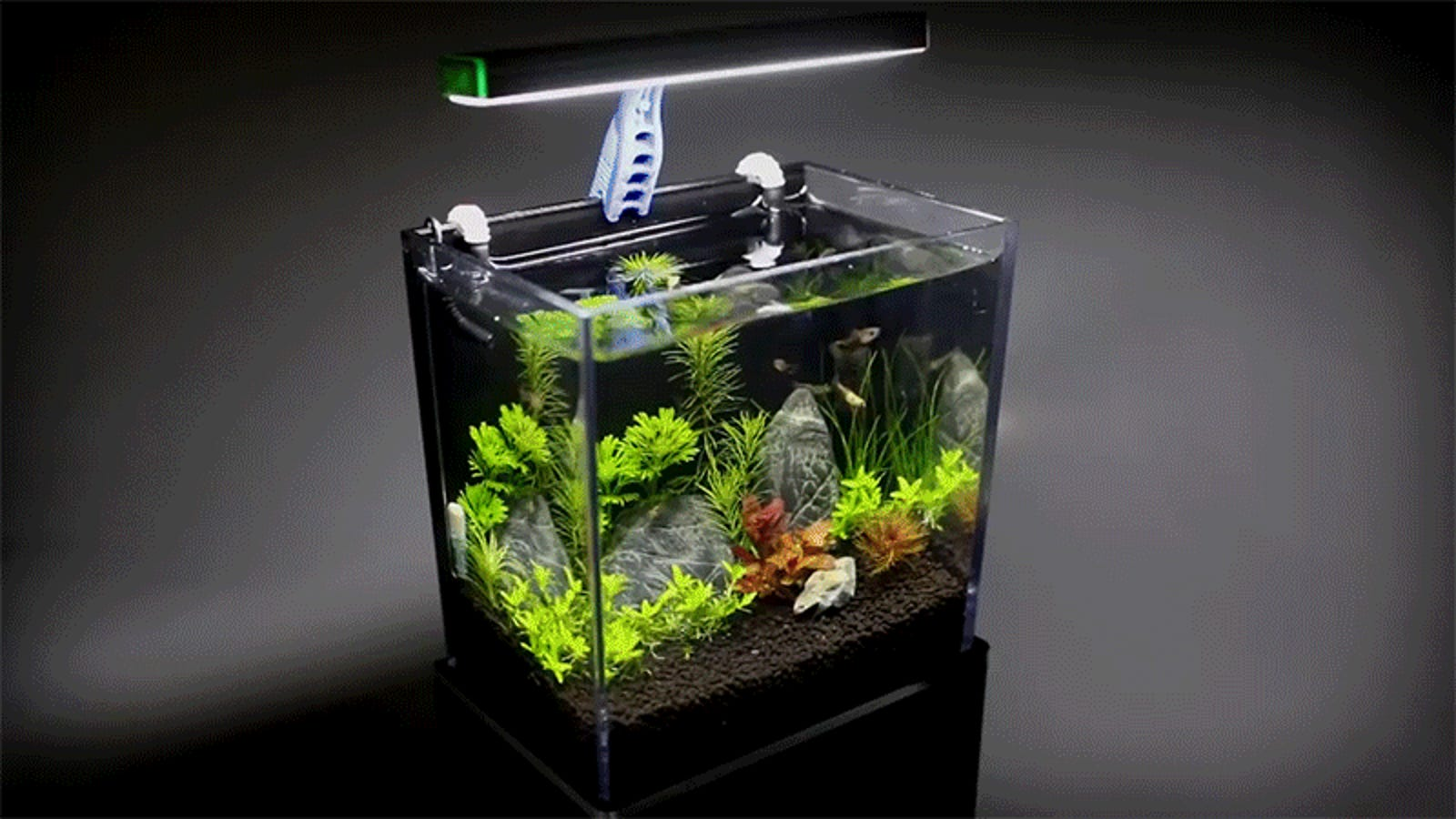 Recycling A Gopro Box Into A Working Aquarium Is The Best
