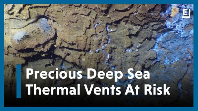Mining Deep Sea Vents Could Put Precious Ecosystems At Risk