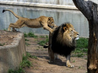 Violence broke out at the National Zoo. (Getty Images)