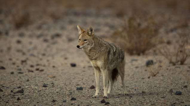 The Department of Agriculture Killed 1.2 Million Wild Animals Last Year