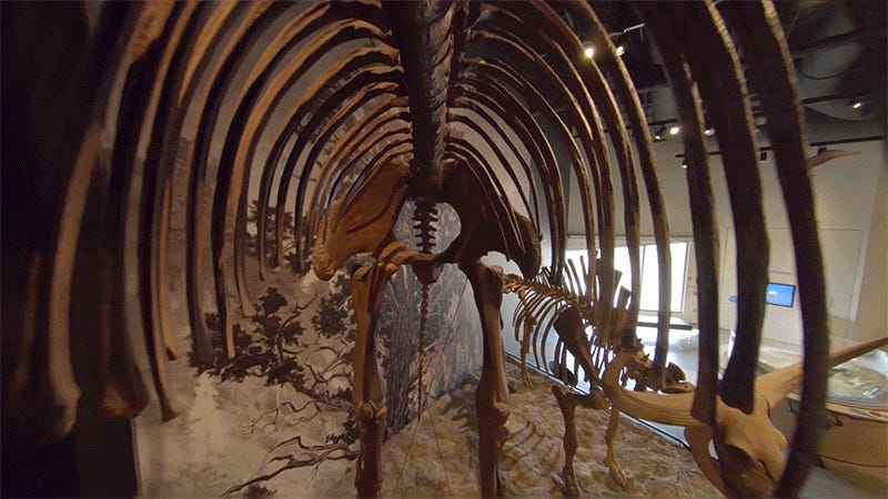 A Tiny Drone Carrying a Deconstructed GoPro Captured This Incredible Dinosaur Museum Fly-Through