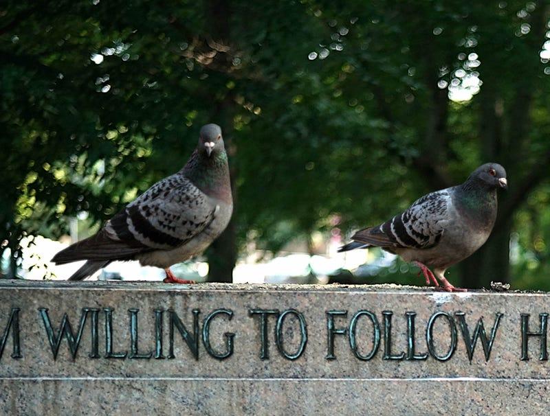 Illustration for article titled Baltimore Pigeons Shocked To Find Beloved Shitting Statues Gone