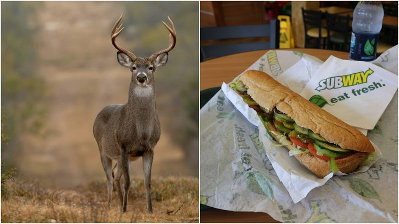 Illustration for article titled Stop feeding Subway bread to deer, warns Colorado wildlife agency