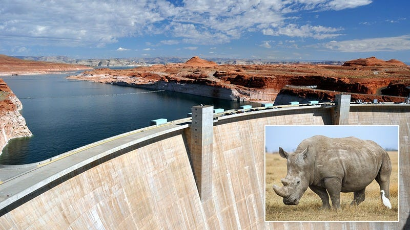 Illustration for article titled End Of An Era: The Last Remaining Male White Rhino, Whose Penis Was Being Used To Fill A Hole In The Hoover Dam, Has Died