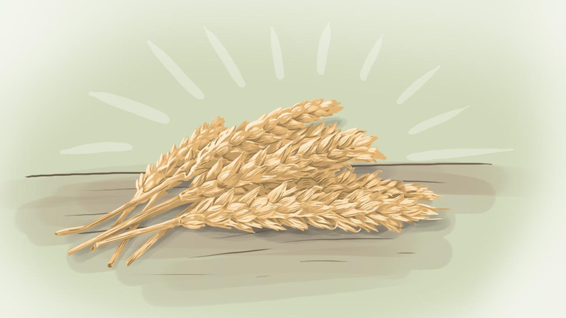 "Illustration for article titled ""Ancient Grains"" Like Quinoa Are Trendier Than Wheat, But No Healthier"