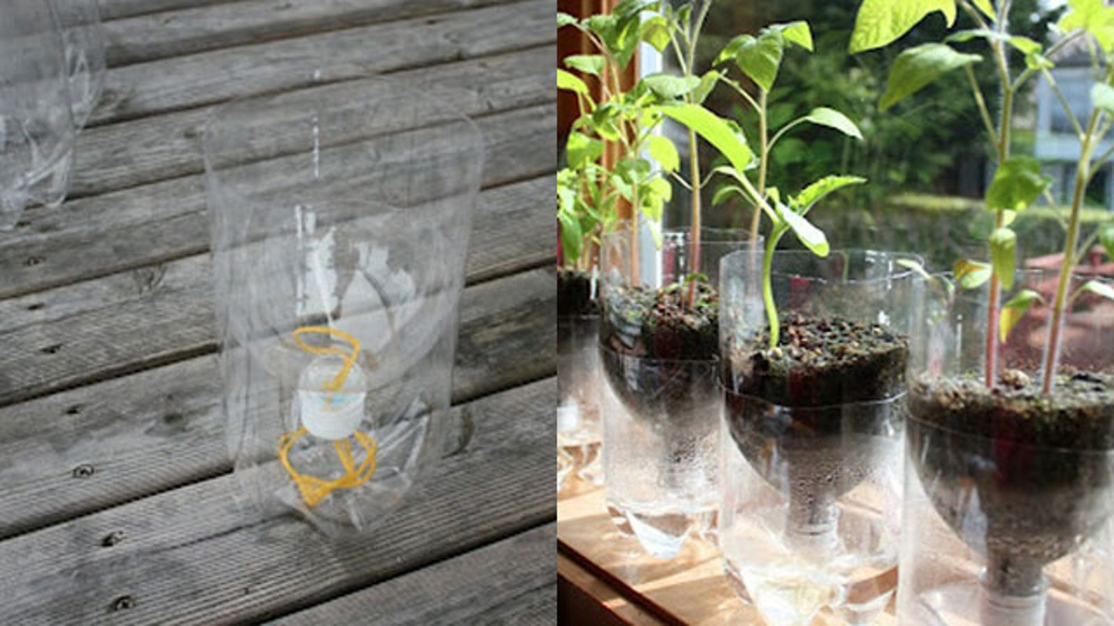 Turn A Soda Bottle Into A Worry Free Self Watering Planter